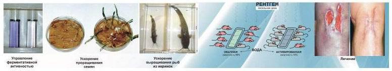 Влияние активированных сред на биосистемы