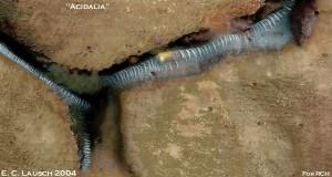 Стеклянные туннели Марса