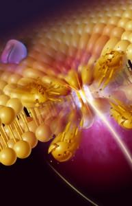 Клеточная мембрана. Свободные радикалы атакуют