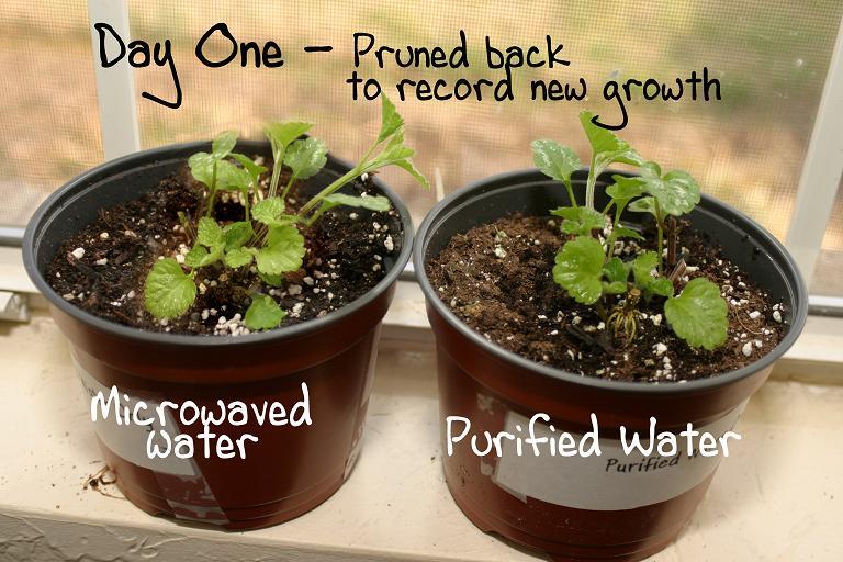 Эксперимент с растениями